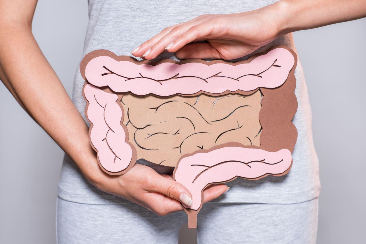 Bactéria no intestino: Exame analisa microbioma intestinal