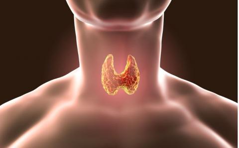Tireoide alta ou baixa: entenda os sintomas e o diagnóstico