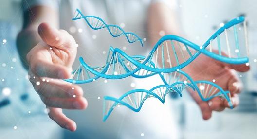 Genetica Salomão Zoppi